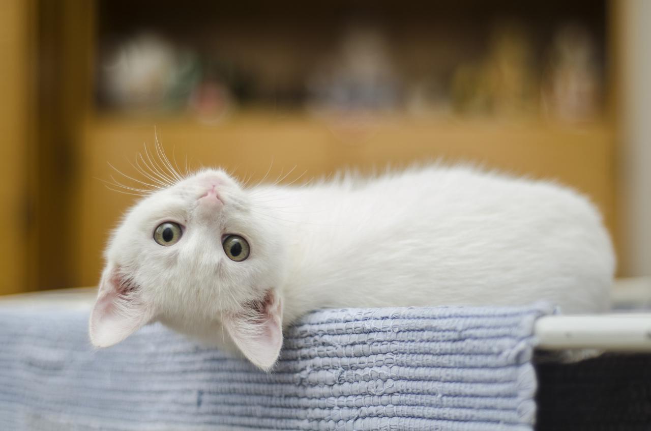 Macskaivartalanítási akció, hogy ne nyávogjon a szemetes